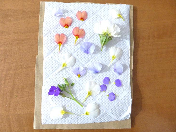 ダンボールとキッチンペーパーの上に並べた花びら