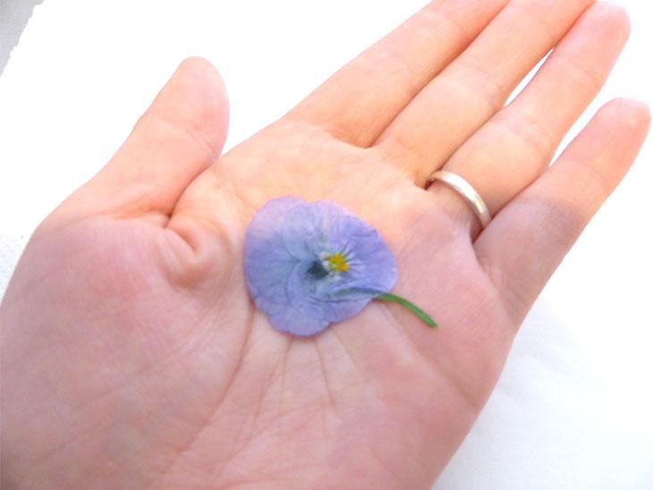 手のひらの上のアイロンで作った押し花