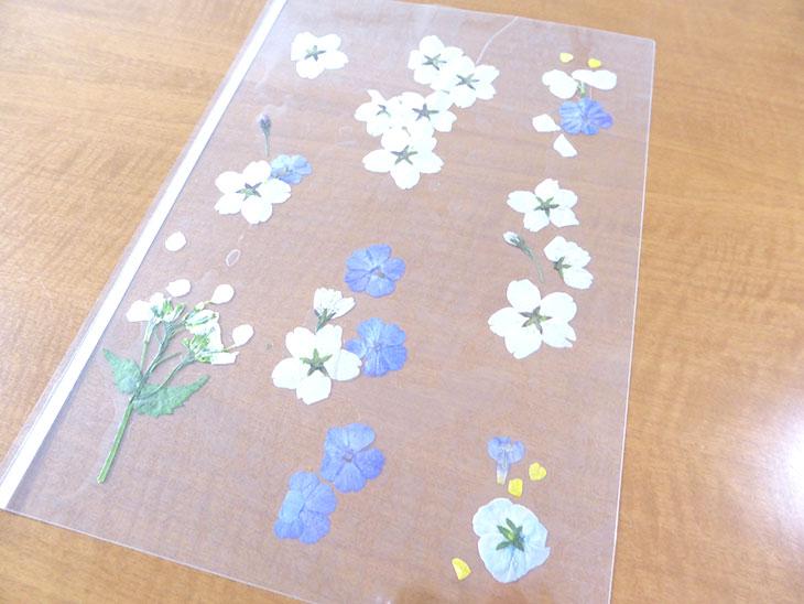 押し花のクリアしおりの工程1-1