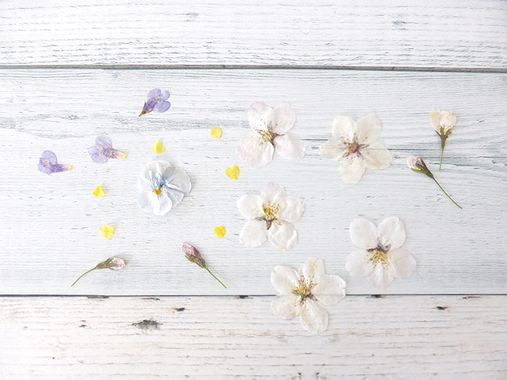 しおり用に手作りした押し花