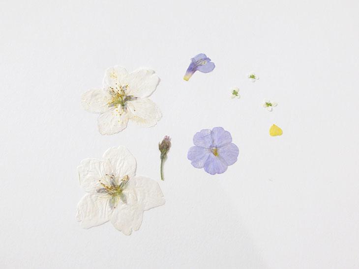 道端の野草で手作りした押し花