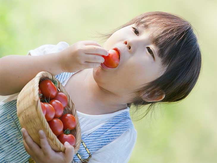 自分で獲ったミニトマトをその場で食べている女の子