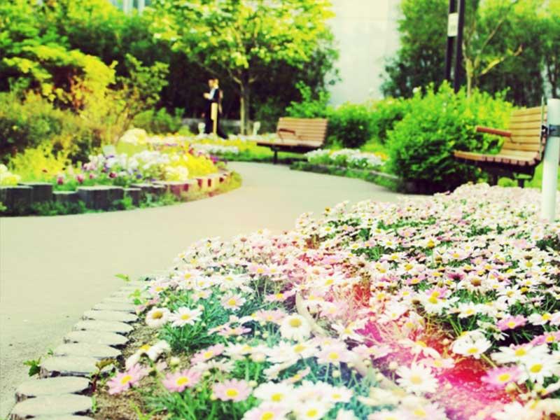 コスモスの花咲く道