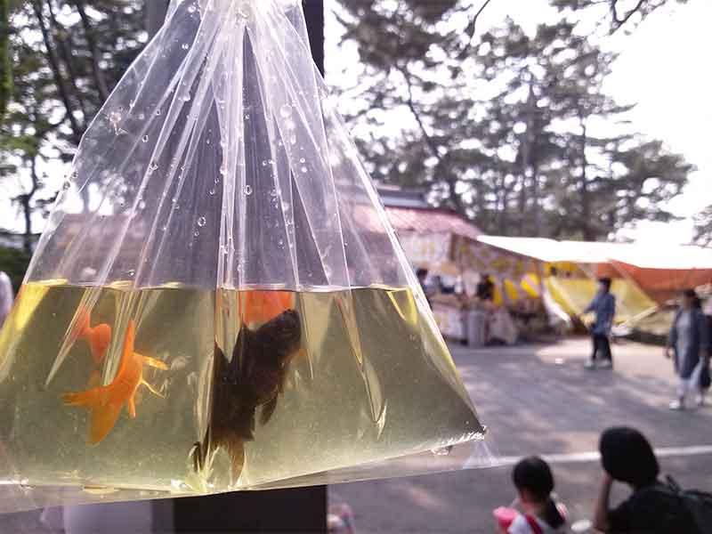ビニール袋に入っている金魚