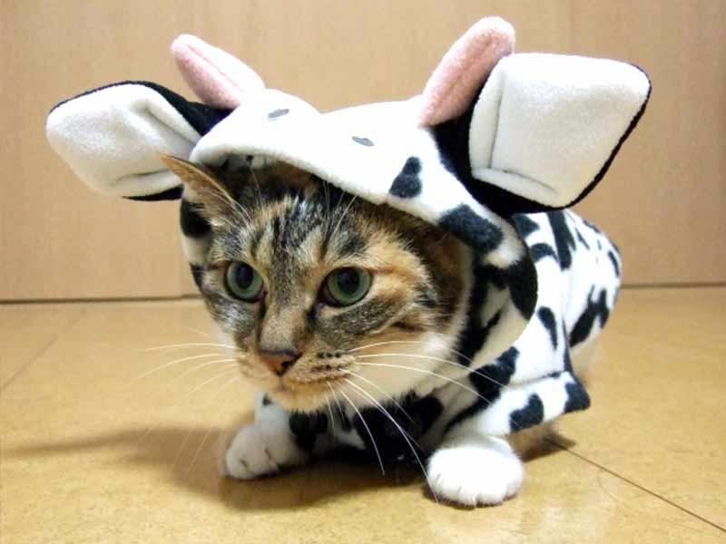 牛の着ぐるみを着た猫