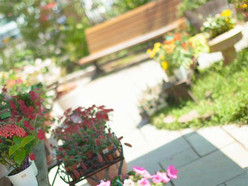 ガーデニングで整えられた庭