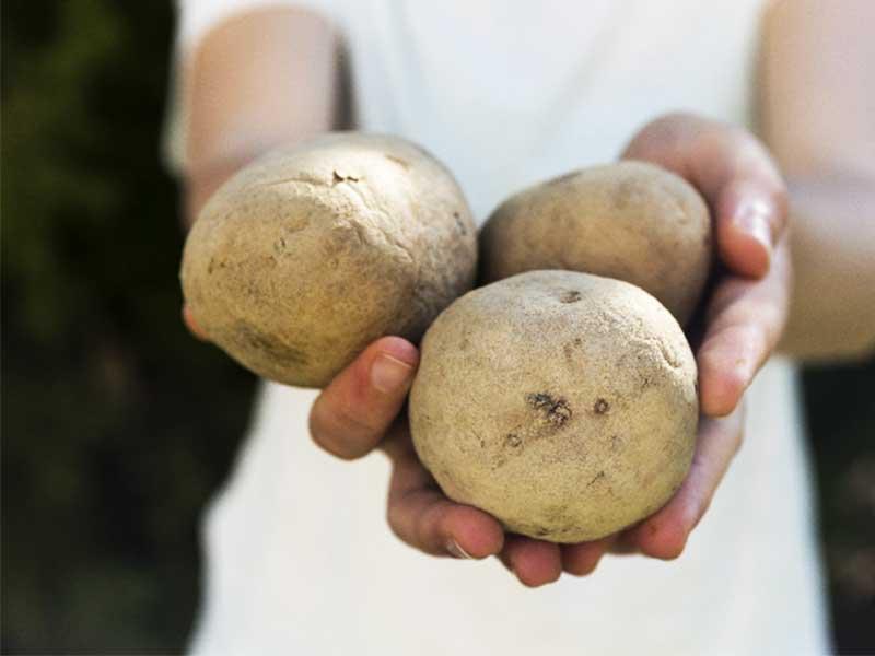 じゃが芋を持つ女性の手