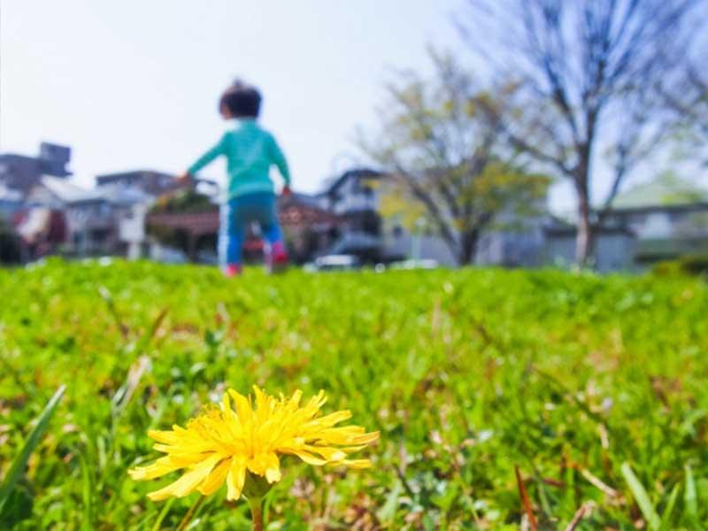 走っている子供と花